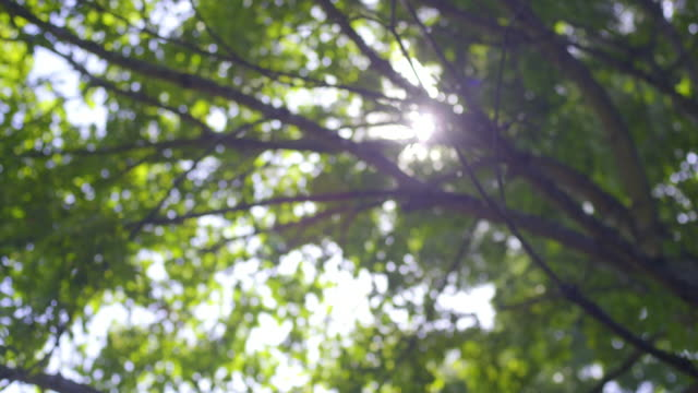 sunlight through leaves. - leaf stock videos & royalty-free footage