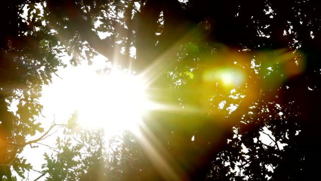 Sonnenlicht durch Eichen HD