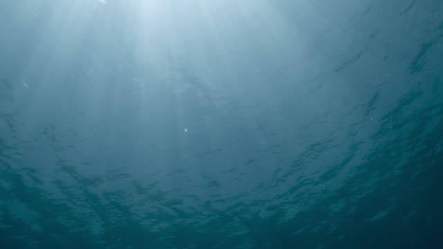 sunlight through ocean surface - sunbeam stock videos & royalty-free footage