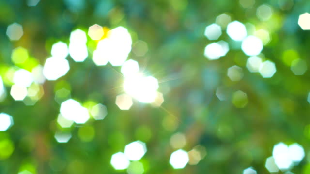 sunlight through the green leaves of tropical tree in the morning - tropical tree stock videos & royalty-free footage