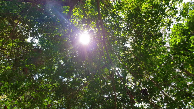 sunlight through the leaves - tree trunk stock videos & royalty-free footage