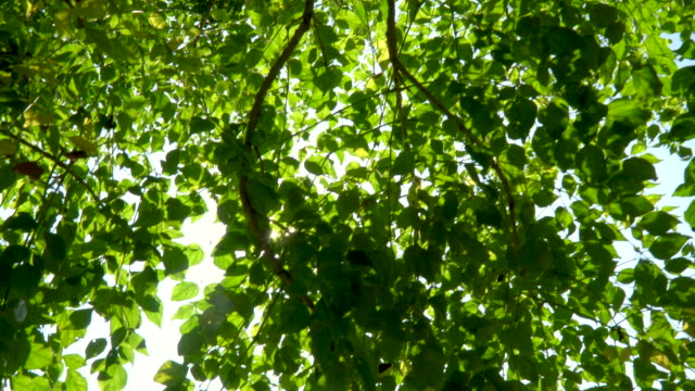 vídeos de stock, filmes e b-roll de luz solar através da árvore, opinião de baixo ângulo - estampa de folha