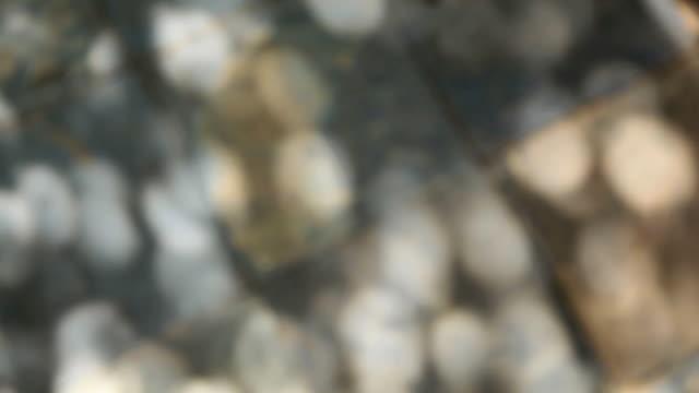 太陽の光の木々。 - セメント点の映像素材/bロール