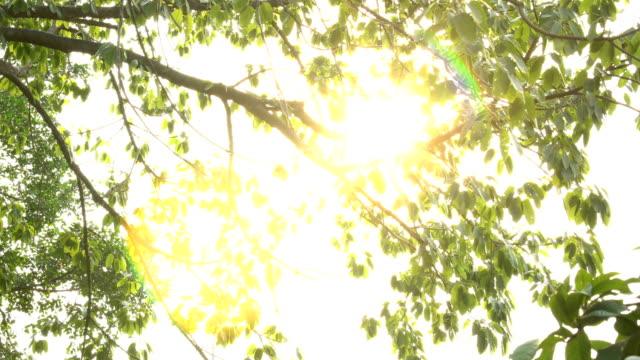太陽の光の木