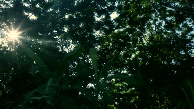 木の木漏れ日。 - タイ王国点の映像素材/bロール