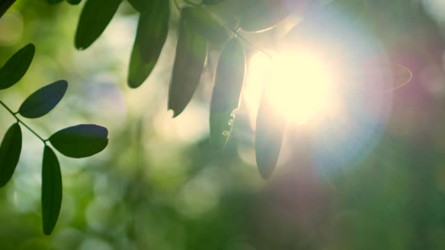sunlight through tree. - swaying stock videos & royalty-free footage