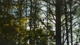 Sunlight through Trees in Forest, Shot in Moving Car
