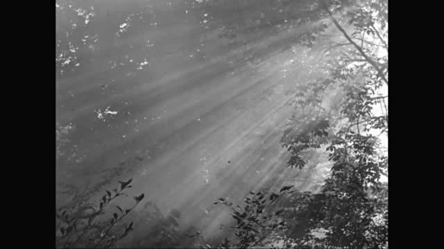 ms sunlight through trees / united states - nebbia video stock e b–roll
