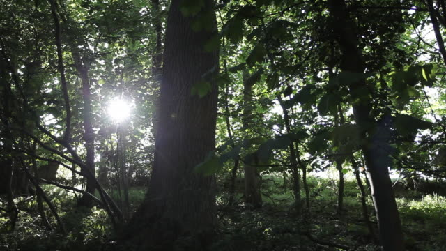 sunlight through trees - tree trunk stock videos & royalty-free footage
