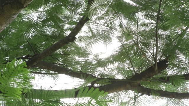 zonlicht door bomen