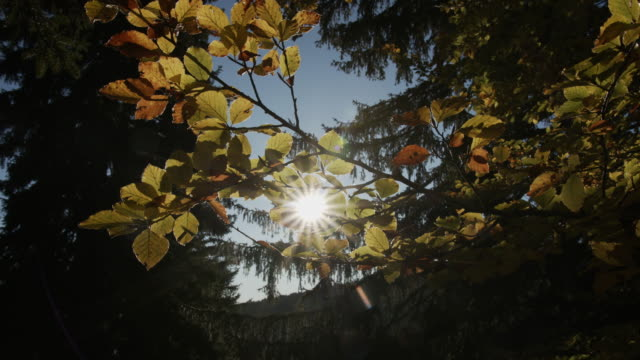 sunlight through yellow tree leaves - durmitor national park stock videos & royalty-free footage