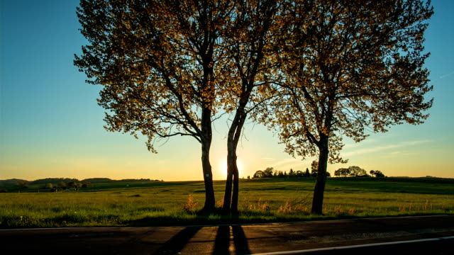 CRANE UP: Sunlight Trees