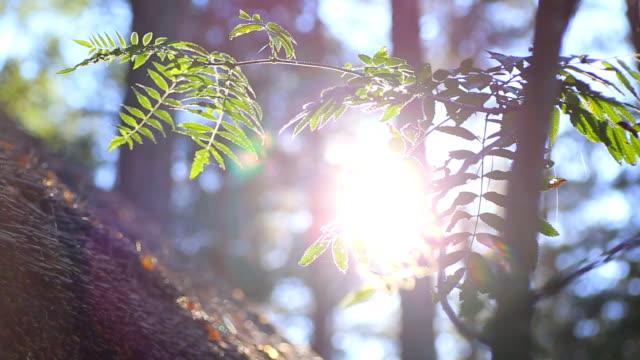 HD Sunlit fern.