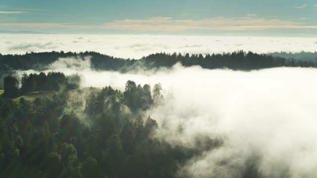vídeos de stock, filmes e b-roll de tendrils sunlit da névoa que rasteja entre o redwood-aerial - sequoia sempervirens