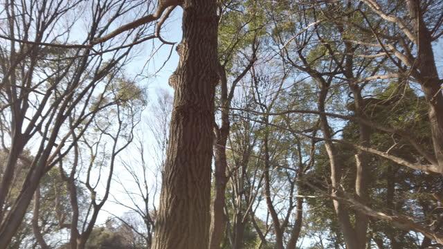 sunlit foliage in yoyogi park in tokyo , japan . - bare tree stock videos & royalty-free footage