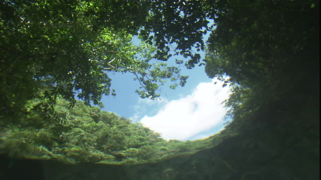 a sunlit sky and lush trees reflect off the water's surface. - distorted stock videos & royalty-free footage