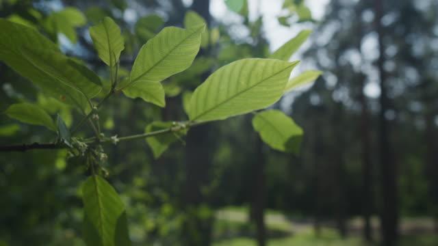 夏林の日照木枝 - 枝点の映像素材/bロール