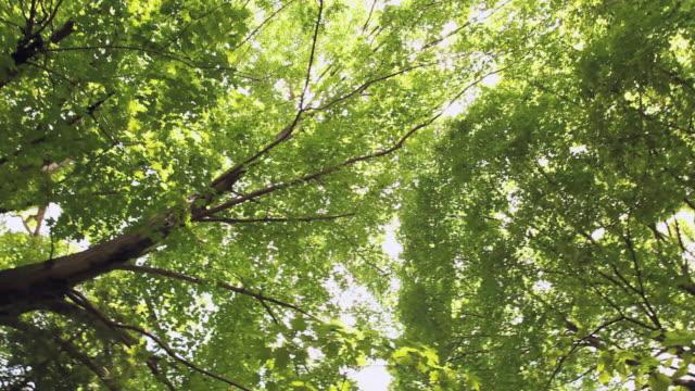 ms la pan sunlit trees / lexington, massachusetts, usa - lexington massachusetts stock videos & royalty-free footage