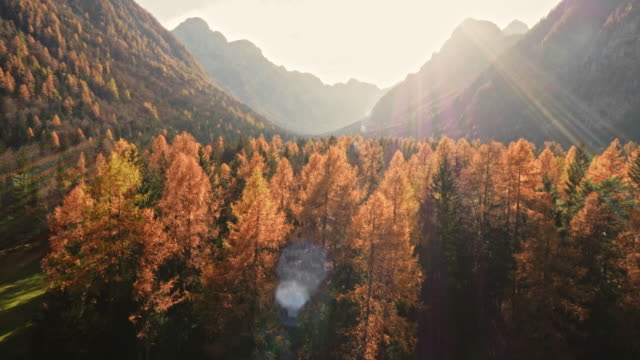 AERIAL Sunlit treetops in fall