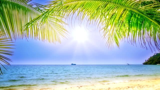 stockvideo's en b-roll-footage met sunny beach - caraïbische zee
