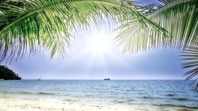 sunny beach - coconut palm tree stock videos & royalty-free footage