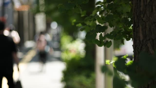 サニー・街並み - ライフスタイル点の映像素材/bロール
