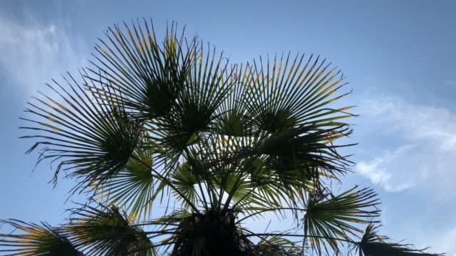 vídeos de stock, filmes e b-roll de um dia ensolarado no sul quente. os raios do sol fazem o seu caminho através das folhas da palmeira. efeito de alargamento da lente - árvore tropical