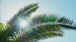 A sunny day in the warm South. The sun's rays make their way through the leaves of the palm tree. Lens flare effect