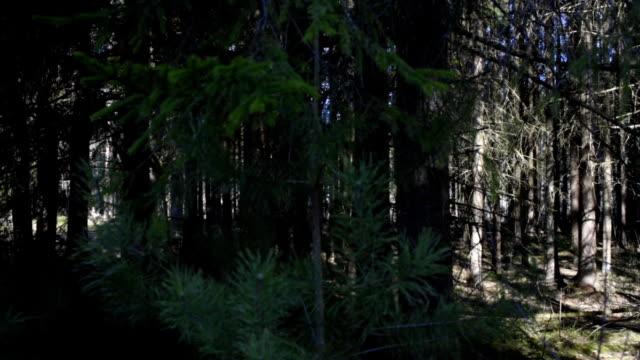 vídeos y material grabado en eventos de stock de día soleado en un bosque - árbol de hoja caduca