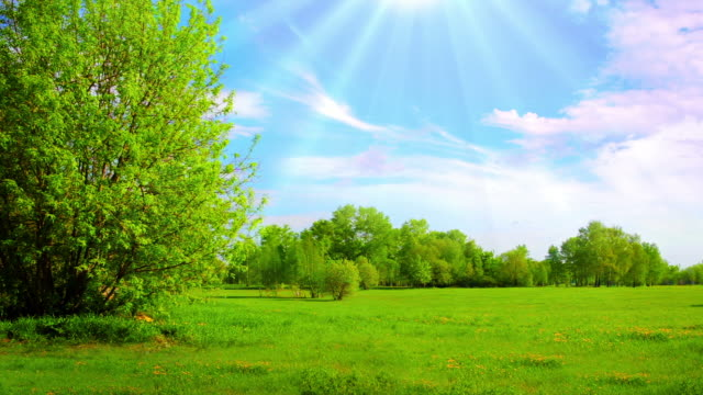 sunny field - tree area stock videos & royalty-free footage