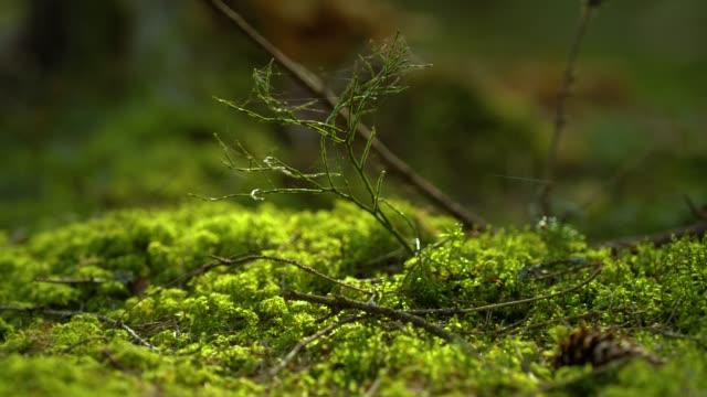 vidéos et rushes de forêt ensoleillée fond macro shot. résolution 4k. - mousse végétale