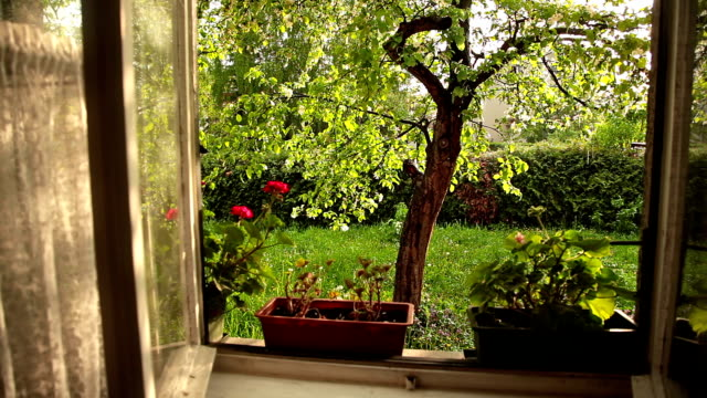 hd: sunny garden in the rain - window frame stock videos and b-roll footage