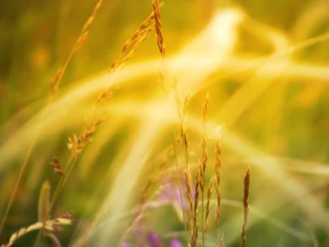 vídeos y material grabado en eventos de stock de sunny de hierba - foco difuso