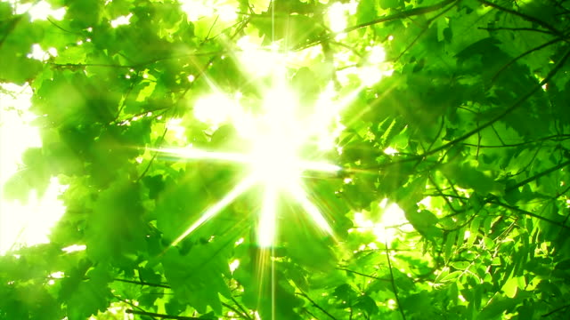 sunny green forest - back lit stock videos & royalty-free footage