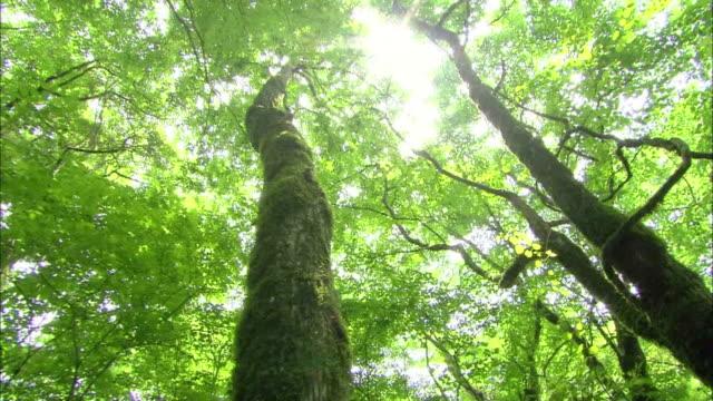 sunny green trees