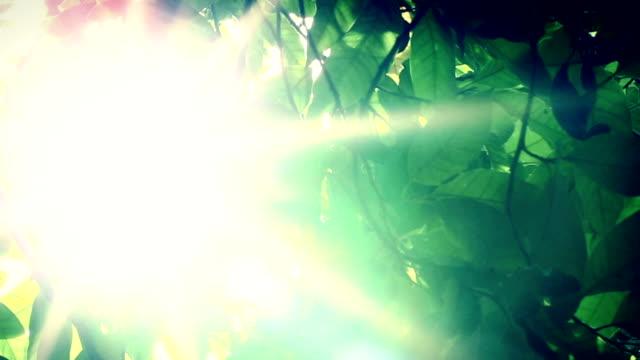明るいグリーンの木