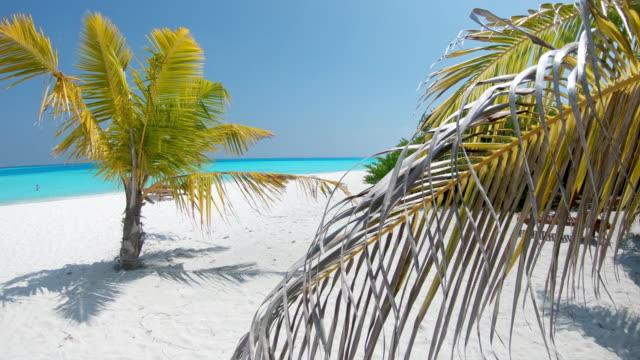 ms sunny idyllic tropical ocean beach,maldives - località turistica video stock e b–roll
