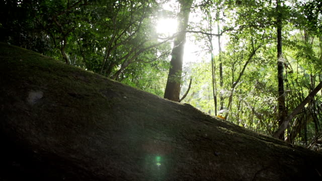 sunny jungle - tree canopy stock videos and b-roll footage