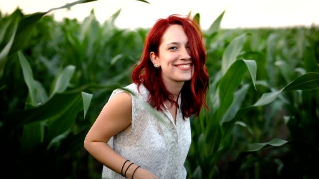 vidéos et rushes de paysage ensoleillé dans le champ de maïs - cereal plant
