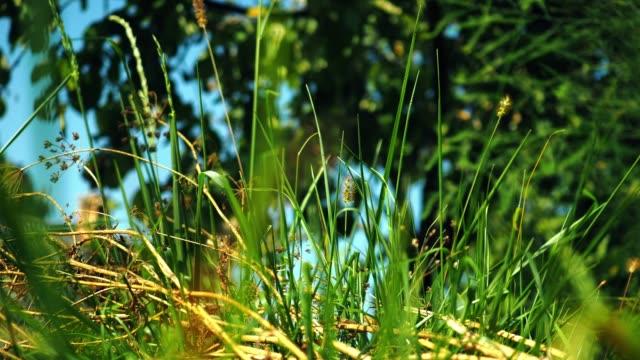草の後ろに日当たりの良い草原 - ローアングル点の映像素材/bロール