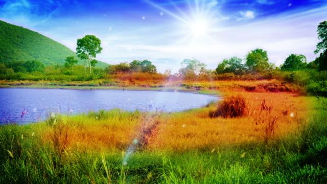 vídeos de stock, filmes e b-roll de ensolarado, perto do lago meadow - parélio