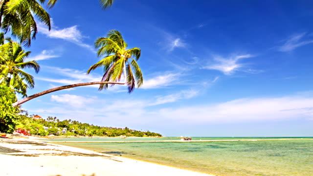 sonnigen palm tree - pazifikinseln stock-videos und b-roll-filmmaterial