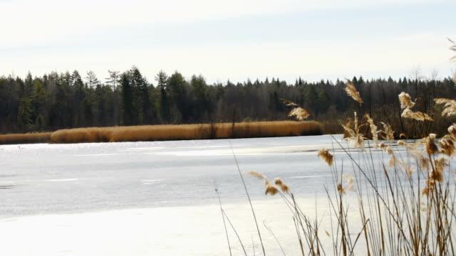春に日当たりの良い川 - 四月点の映像素材/bロール
