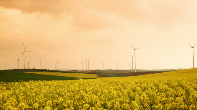 ds sunny shot eines rapsfeldes und windkraftanlagen drehen sich in der ferne - turbine stock-videos und b-roll-filmmaterial