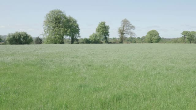 sunny spring countryside,Northern Ireland
