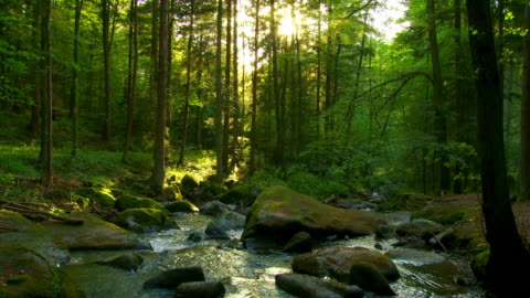 sunny spring forest cinemagraph - flowing water stock videos & royalty-free footage