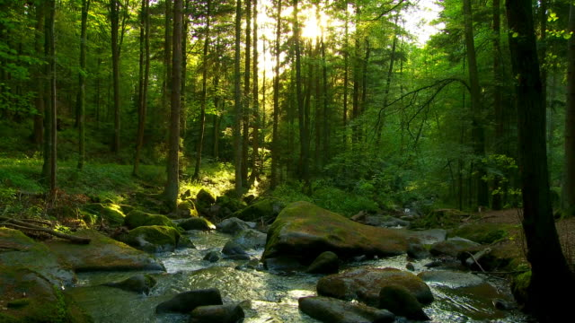 stockvideo's en b-roll-footage met zonnige lente forest cinemagraph - stroom stromend water