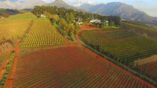sunny stellenbosch - stellenbosch stock videos and b-roll footage