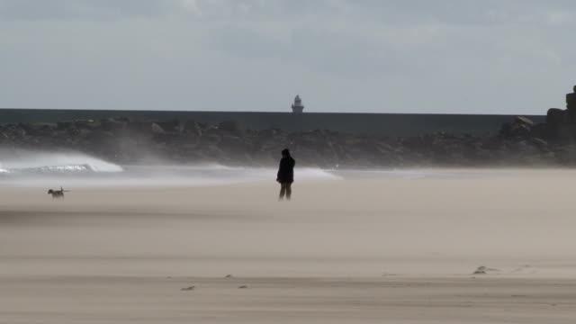 vídeos y material grabado en eventos de stock de sunny windy uk day dog owner and walker struggles to walk no - noreste de inglaterra
