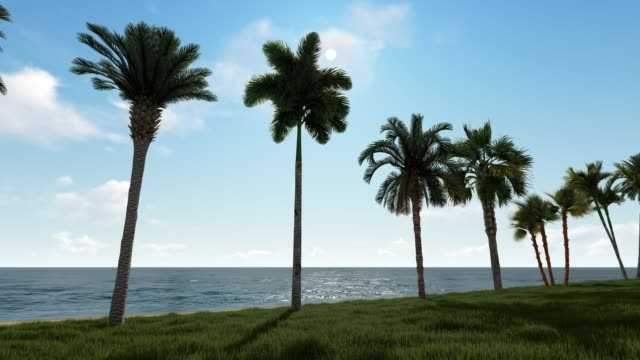 sunny wonderful beach landscape with palm trees - palm leaf stock videos & royalty-free footage